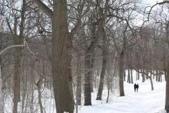 Snow-Mount-royal-Montreal-Québec